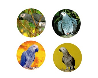 African Grey Parrot  Magnets:  4 African Greys for your home, your collection,  or to give as a unique gift