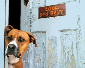Room for Rent, large original photograph of boxer dog looking out of rooming house door