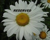 Reserved for hubbellcot-Please do not buy unless you are Him
