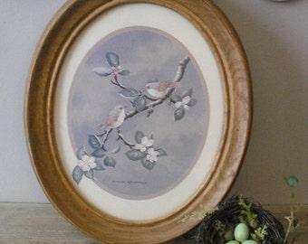 Vintage Oval framed Bird picture BIRDS cherry blossom tree branch finch David Andrews