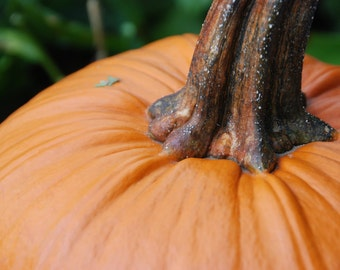 Pumpkin Photo, Halloween Night, Autumn Photography, Vegetable Photo, PRINTABLE INSTANT DOWNLOAD, Digital Image, Orange, October