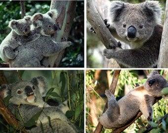 Lot Of 4 Koala Bear Fabric Panel Squares