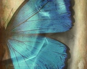 LADY BUTTERFLY Abstract Color Original Art Photograph