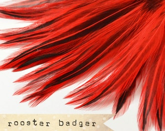 35-40 pcs - Rooster Badger Saddle - Red - stripes, exotic feathers