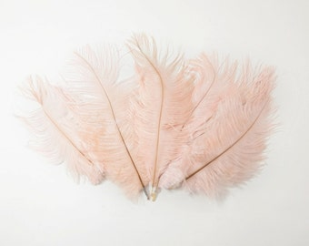 "Petite Ostrich Drab Feathers - Blush Pink, 4-8"" (12pcs)"