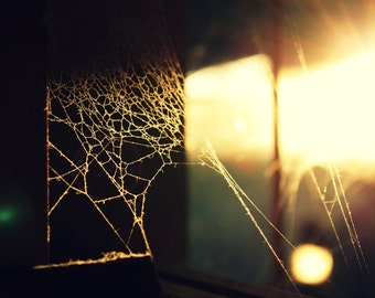 Morning Web Photograph, Spiderweb Art, Tranquil Home Decor, Sunlight Art, Spider Web Photography