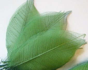 One Dozen Sage Green Skeleton Leaves Great for Corsages, Hair Clips, Paper Crafts