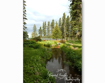 Nature Landscape Photography, National Park Print, Lake House Cottage Decor, Cabin Wall Art, Grass, Manitoba, Woodland, Forest, Gift for Him