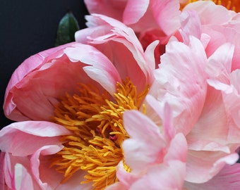 Two Pink Peonies IV