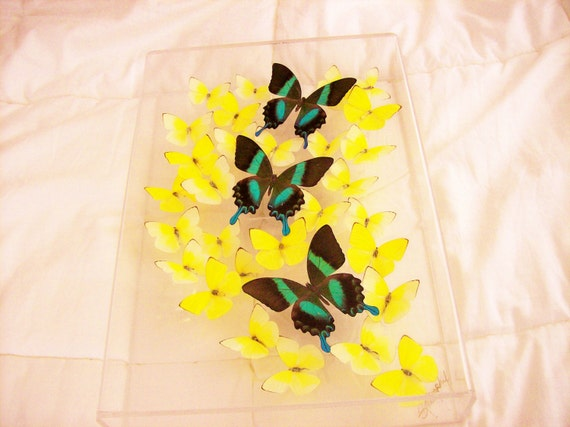 Real Swarm of Beautiful Emerald Green Butterflies Among An Array of Pastel Yellow Butterflies