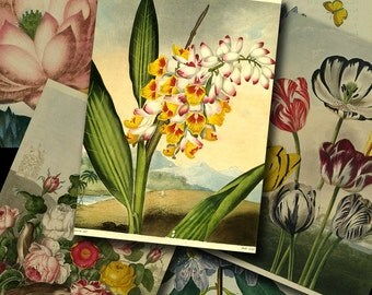 2.5x3.5 inch VINTAGE GARDEN Digital Printable collage sheet for Tags Cards Paper Crafts...botanical lotus carnation tulip hyacinth