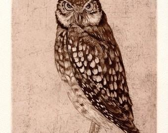 Burrowing Owl, Original Aquatint Etching