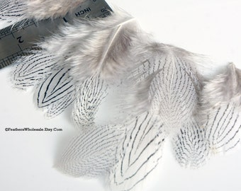 Silver Feathers Pheasant Short Craft Feathers White with Black Zebra Stripe Pattern Feather Craft Supply Feather Earring Making - 12Pcs