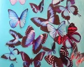 BONANZA of BLUE BUTTERFLY edible wafer paper for your iced cookies, cakes, cupcakes