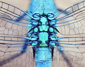 Dragonfly Wings 8x10 Fine Art Photograph - Blue, Wings, Insect