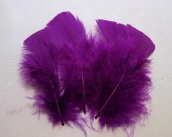 50 Purple Turkey Flats Plumage, loose feathers K8 boutonnieres ,crafts