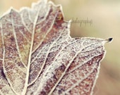 Autumn Maple Leaf Photography Print  - First Frost - Warm Brown Woodland Autumn Leaf Photography Forest Art -  Maple Brown Wooodland Art