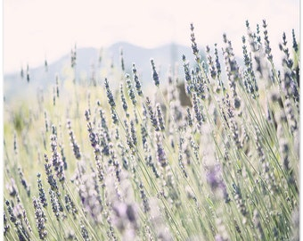 Nature Photography, Still Life Photo, flowers, lavender, fine art print