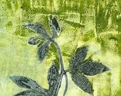 detail, giclee print, Passion Vine - 88editions