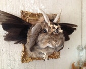 Lord Asian Is The Last Of His Kind A Winged Taxidermy Jackalope