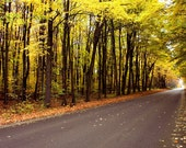 Autumn Photography, Fall,  Woodland, Leaves, Yellow, Trail, Road, Gold, Orange,  Rustic, Country