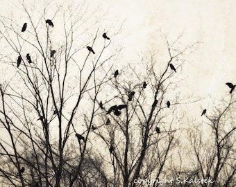 Crows in Tree Photograph Soft Gray Cream Black Wall Art, Tree Branches,Forest, Crows, Warm Brown Grey Print 8x12