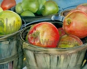 "Basket of McIntosh Apples at a Farmer's Market, Red & Green, Watercolor Painting Print, Wall Art, Home Decor, ""Scottish Apples"" Judith Stein"