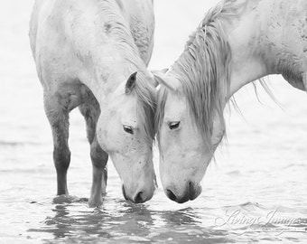 In the Water At Dawn II - Fine Art Horse Photograph - Horse - Camargue  - Black and White - Fine Art Print