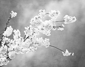"Grey Photograph, light black and white floral pale gray nature print spring branches botanical branch wall art photo, ""Autograph of Angels"""