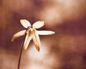 "Flower Photography - brown copper bronze nature rustic photo rust modern fine art print botanical artwork - 10x10, 8x8 Photograph, ""Copper"""