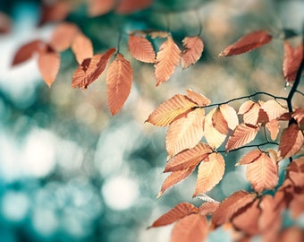 "Blue Brown Photography, copper beige teal print aqua turquoise gold light photo leaves branches wall art rust leaf picture, ""November Bliss"""