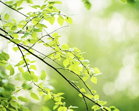 nature spring green tree - photo #5