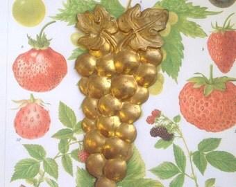 Rare Vintage Jumbo Grapes