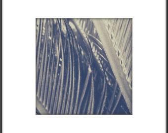 Modern Botanical Wall Art 12x12 Desert Palm