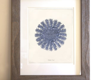 Antique Blue Coral Art Print - Natural History - Wall Art - Home Decor - Globular Coral 2 - Deep Blue