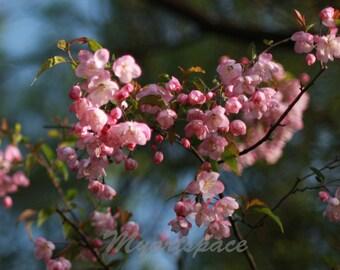 Pink Flowers Blossom, Spring tree flowers, Delicate, Spring macro print, Nursery pink tree, bedroom, boho floral decor