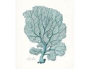 Coastal Decor Venus Sea Fan Sea Coral Giclee Art Print 8x10 tide pool