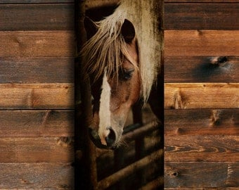 cow pony horse photography animal photography horse art horse decor horse - Horse Decor