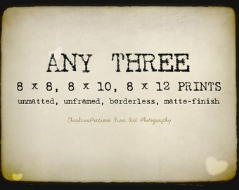 """10% OFF YOUR ORDER of any three 8 x 8"""", 8 x 10"""", or 8 x 12"""" prints!"""