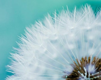 dandelion photography dandelion decor wall art botanical print 8x10 20x30 fine art photography floral flower photography teal blue large art