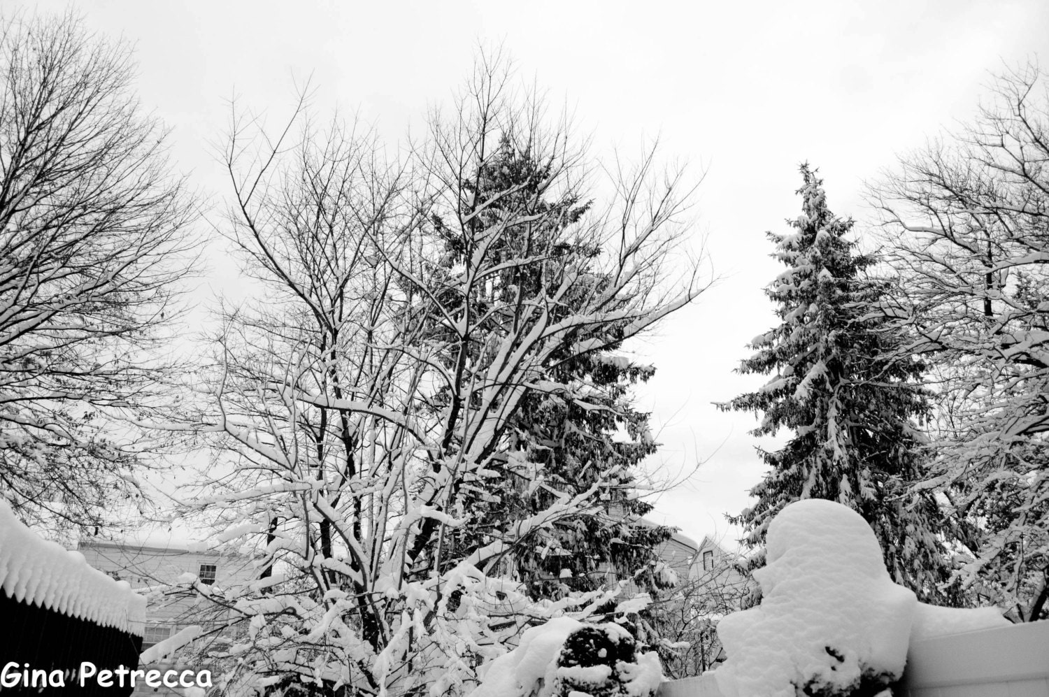 black and white snowy trees in yard photo print photography