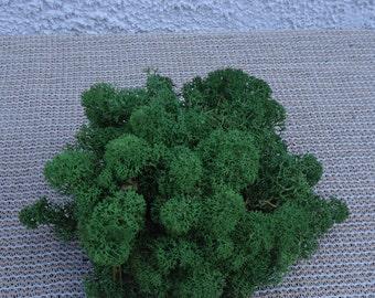 Reindeer Lichen-Dark Green