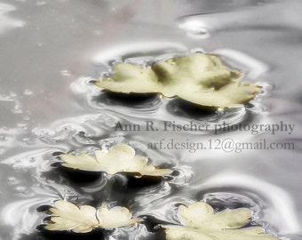 Leaves on Water Photo, Nature Photography, Lake Photo, 5 x 7 Metallic Print