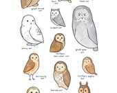 Illustrated Owl Species Chart - Whimsical Art Print 13x19