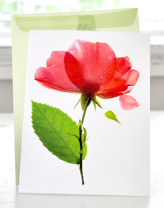 Floral Greeting Card Pink Rose flower Note Card Alice Rose Pink
