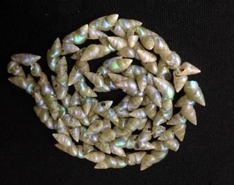 Rare Antique Tasmanian Aboriginal Irridescent Marineer Shell Necklace