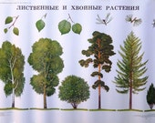 Trees Botanical Print, Vintage School Poster, Home Decor, Nature Class Posters, Vintage Print, Picture of Trees, Wall Hanging