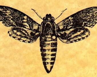 Convolvulus Hawk Moth Rubber Stamp