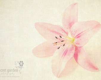spring flower colour photo print - whimisical fine art nature photography, pink, white, floral, soft, pretty