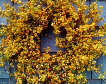 Fresh Bittersweet Wreath- Perfect For Fall - SEASONAL ONLY